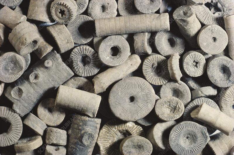 Aluminium, engrenage et million d'années… - Page 2 C0093863-Crinoid_Fossil_Pieces-SPL