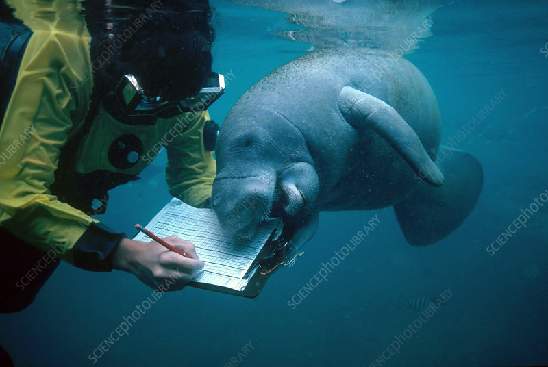 essays on marine biology Free marine biology papers, essays, and research papers.