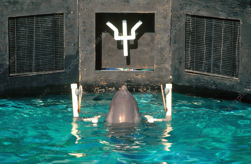 Dolphin Intelligence Research (1 of 3)