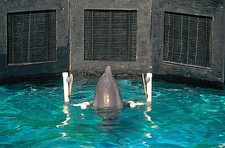 Dolphin Intelligence Research (2 of 3)