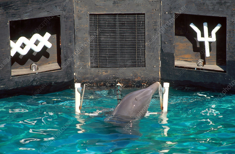 Dolphin Intelligence Research (3 of 3)