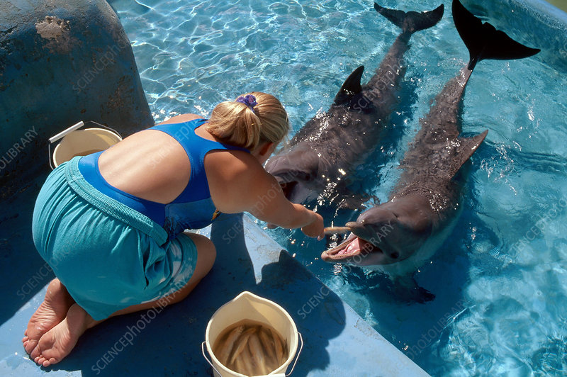 Dolphins with Trainer