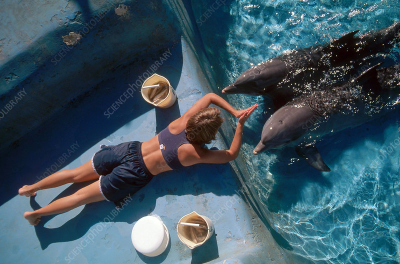 Researcher with Dolphins