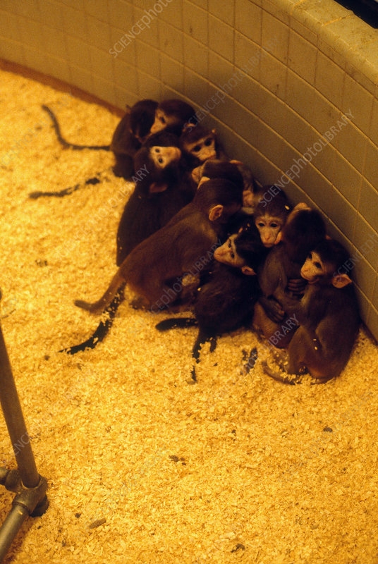 Young Monkeys at Veterinary School