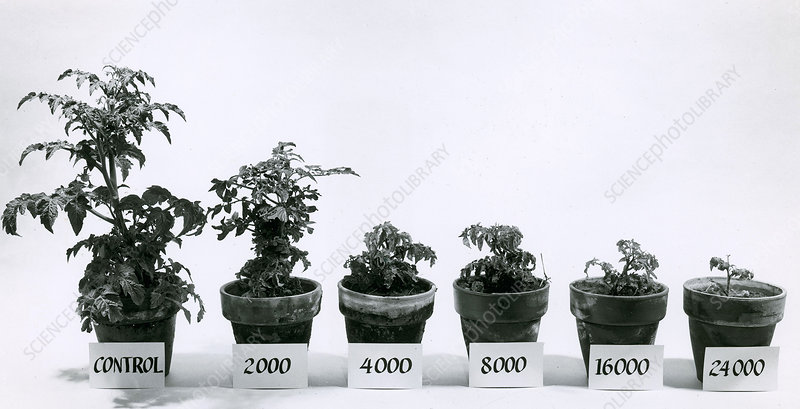 Radiation and Tomato Plants