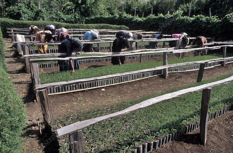 Ethiopian terrace farming stock image c009 5009 for Terrace farming model