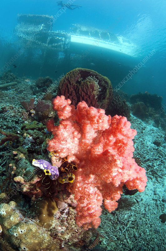 Soft coral and sea squirts