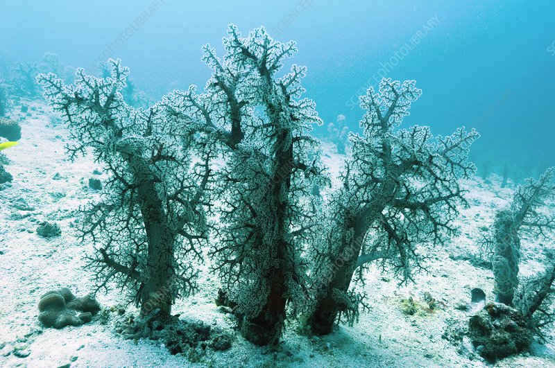 Soft corals on the seabed
