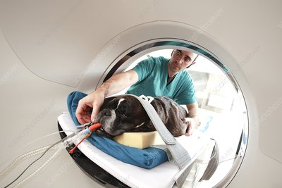Veterinary CT scan