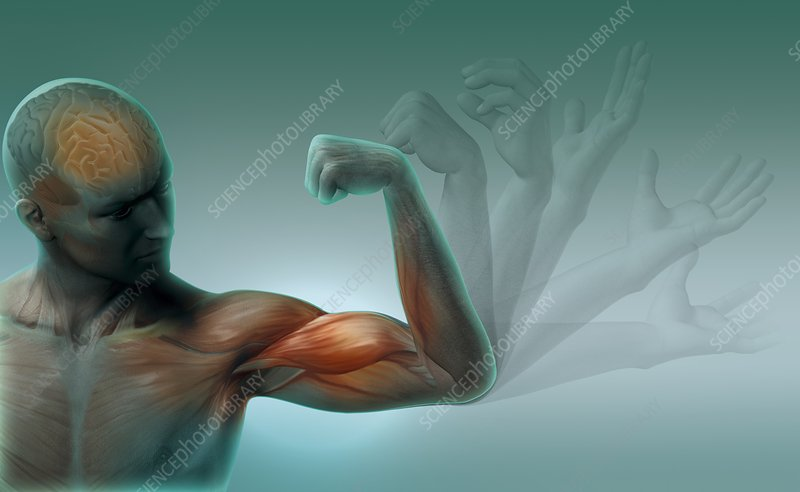 Male muscles, artwork
