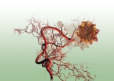 Cancer blood supply, artwork