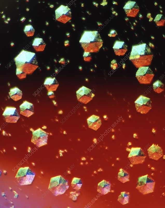 Insulin crystals, light micrograph