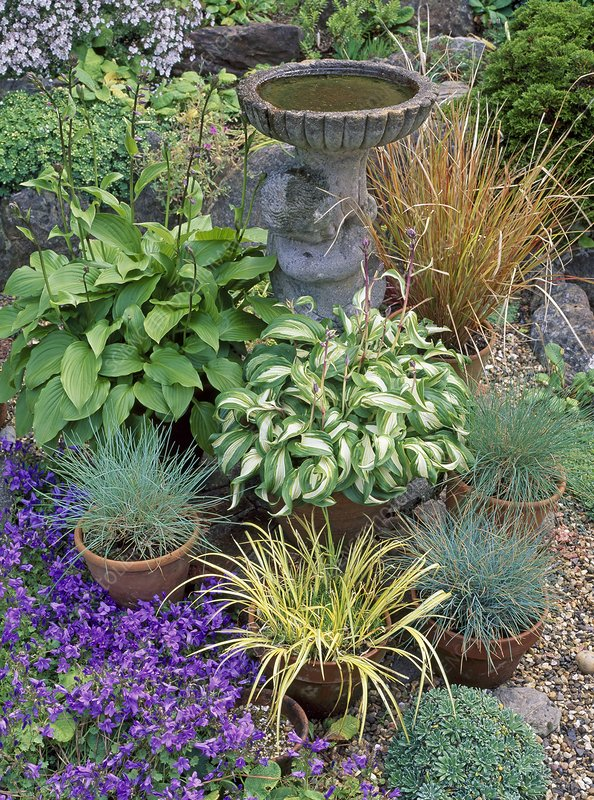 Birdbath with pots of perennials