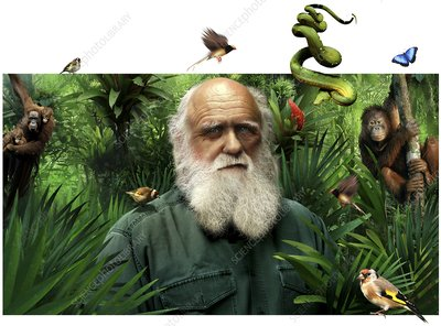 charles darwin british naturalist essay Best answer: charles darwin (1809-1882) was an an english naturalist whose theory of evolution is one of the greatest contributions ever made to science darwin .