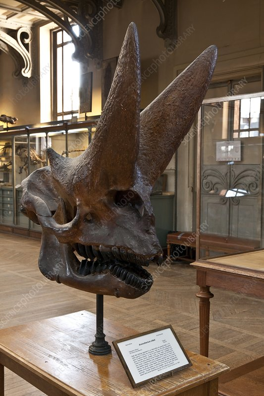 Natural history museum, France