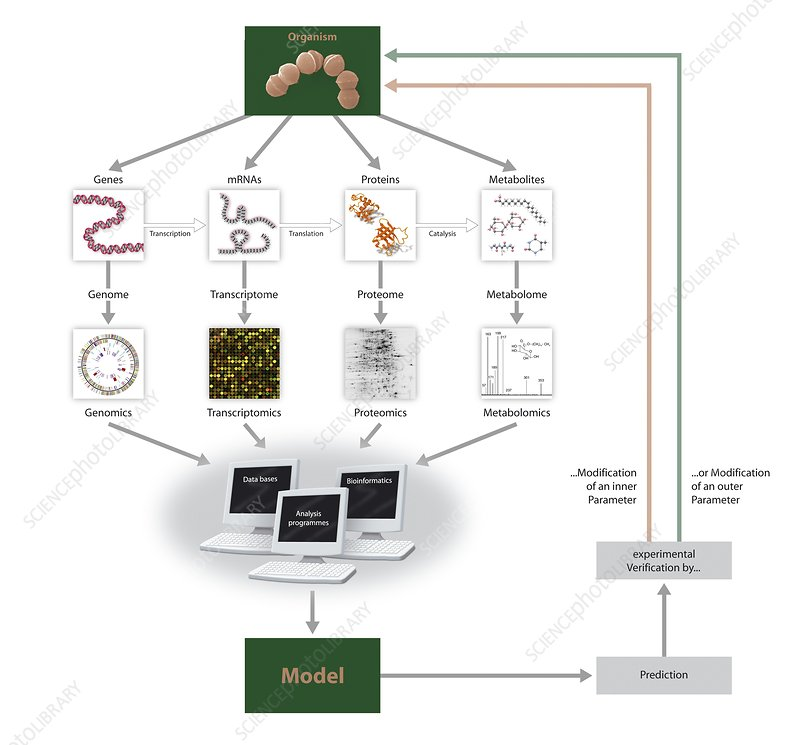 Systems biology, flow chart