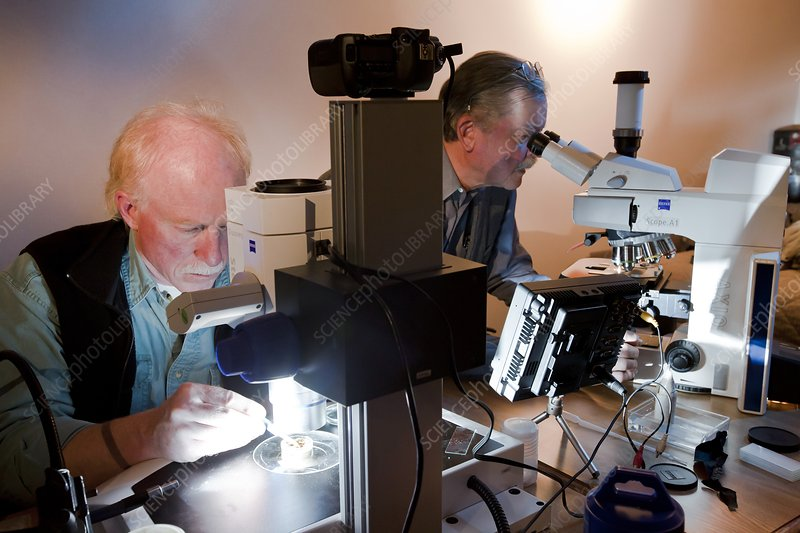 Extremophile research