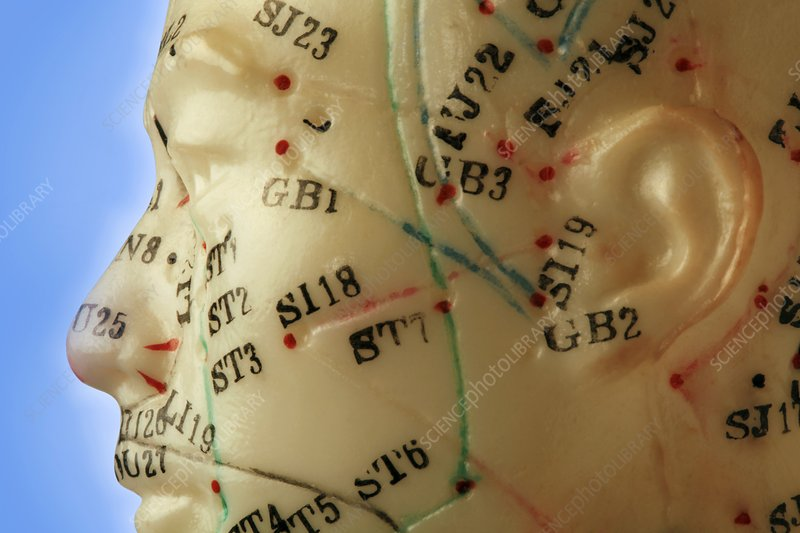 Chinese acupuncture model - Stock Image - C009/9132 ...