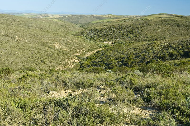 Renosterveld conservation area
