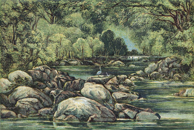 River in Tasmania, 19th century