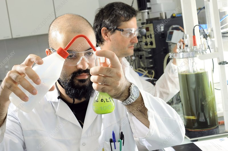 Microalgae biofuel research