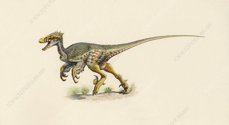 Dromaeosaurus dinosaur, artwork