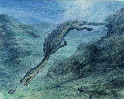 Nothosaurus dinosaur, artwork