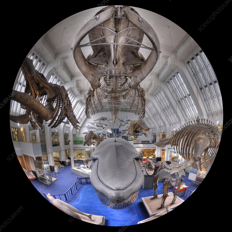 Natural History Museum's Blue Whale Hall