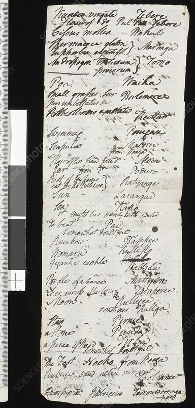 Robert Brown's expedition notes, 1803