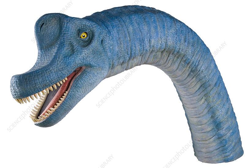 Brachiosaurus dinosaur model
