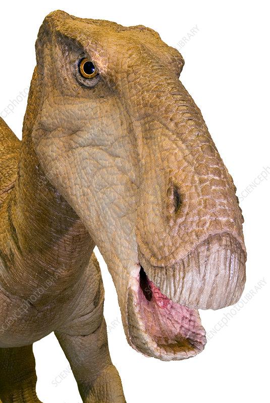 Iguanodon dinosaur model