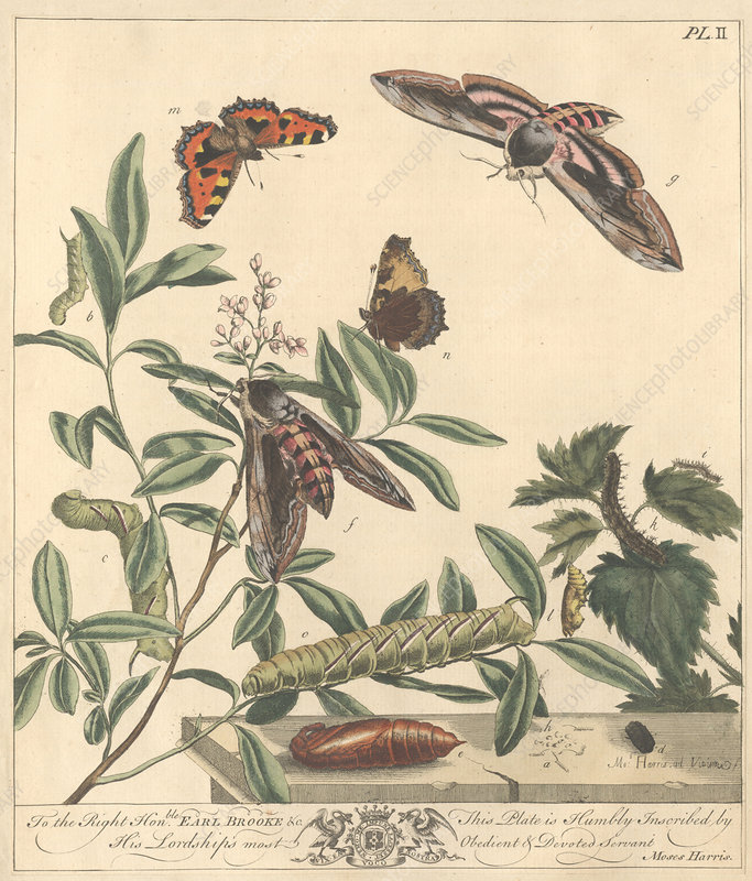 Butterflies and moths, artwork