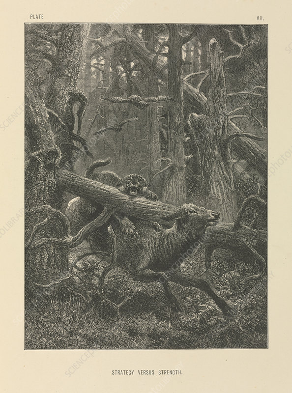Deer and forest cat, 19th century