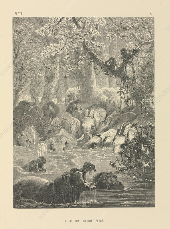 Tropical watering hole, 19th century