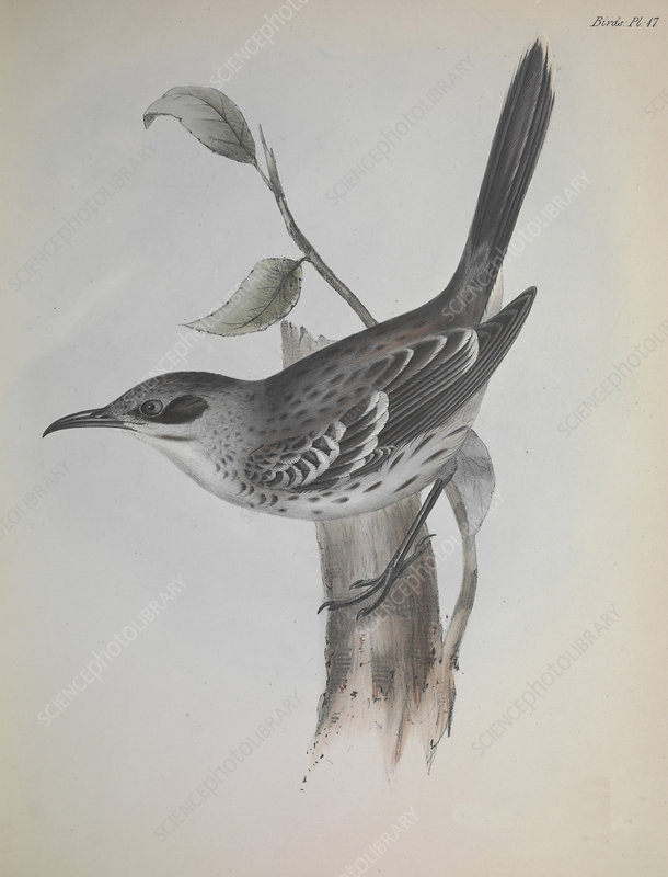 Mockingbird, artwork