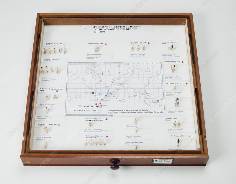Beagle voyage map and display, 1830s