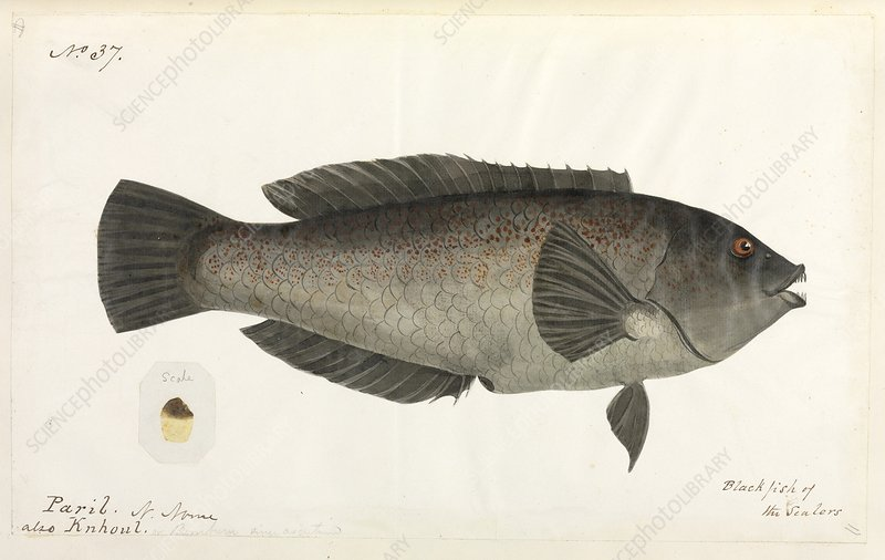 Fish, artwork