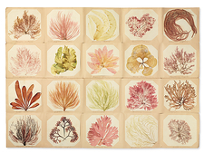 Pressed seaweed book, 19th century