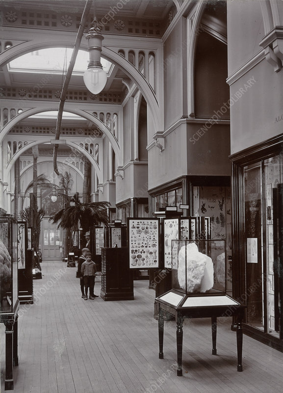 Natural History Museum gallery, 1911