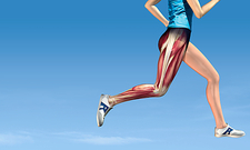 Leg muscles in running, artwork