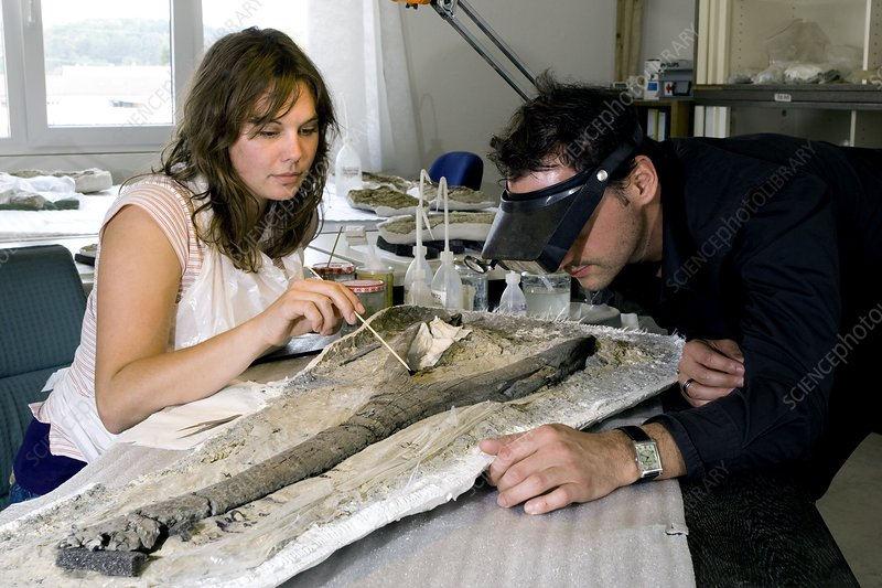 Palaeontologists and fossil