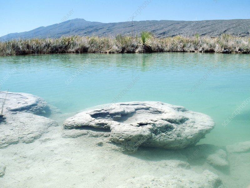 Stromatolites, Mexico