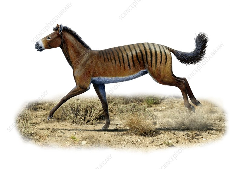 Prehistoric horse, artwork