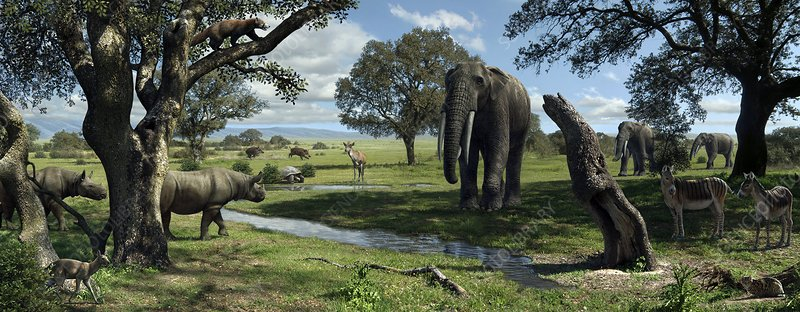 Wildlife of the Miocene era, artwork