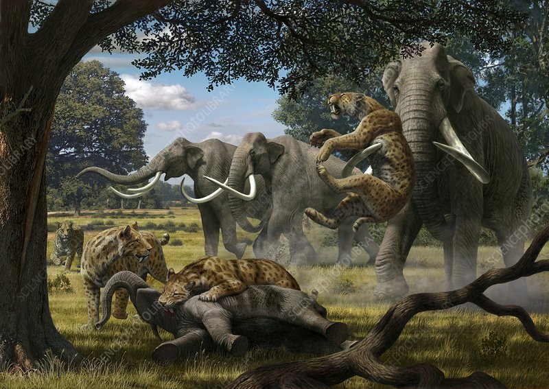 Mammoths and sabre-tooth cats, artwork