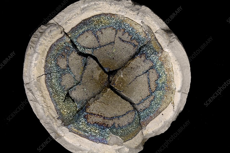 Iridescent pyrite in a clay nodule