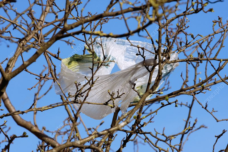 Sycamore and plastic bag