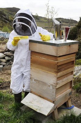 Beekeeper with EpiPen