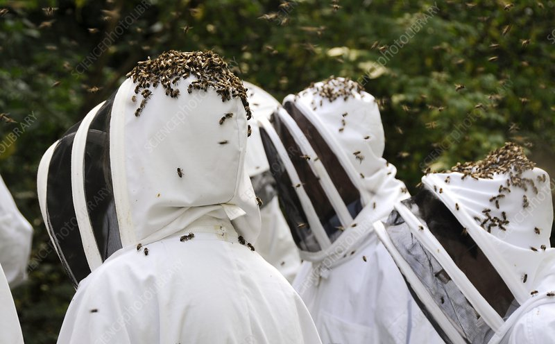 Beekeepers and bees