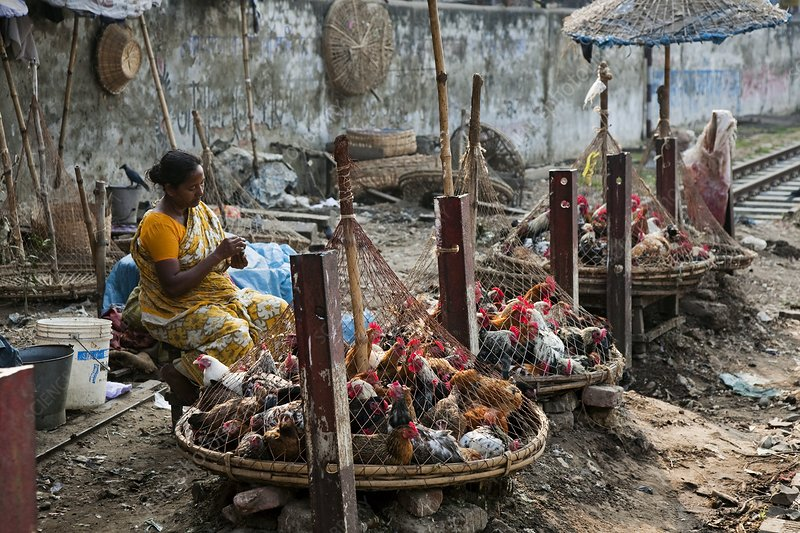 Dhaka slum, Bangladesh